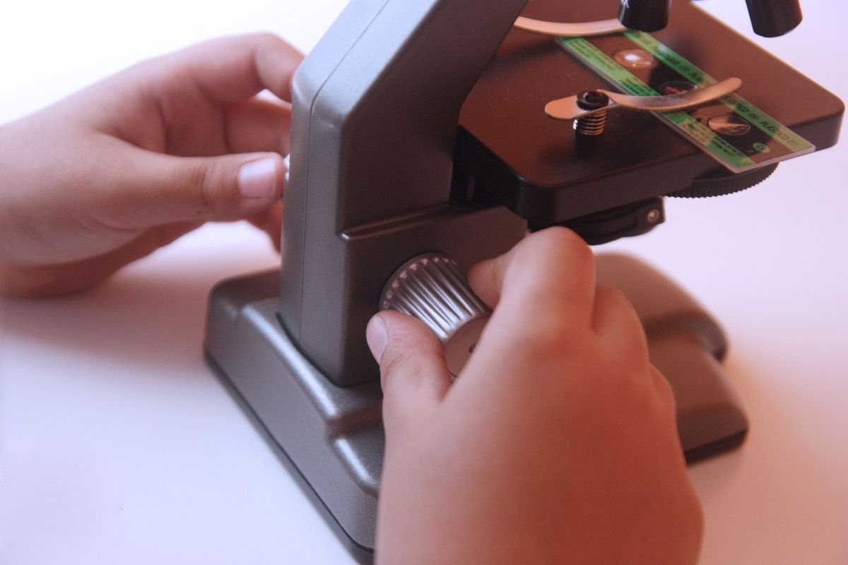 Ajustando la rueda del microscopio