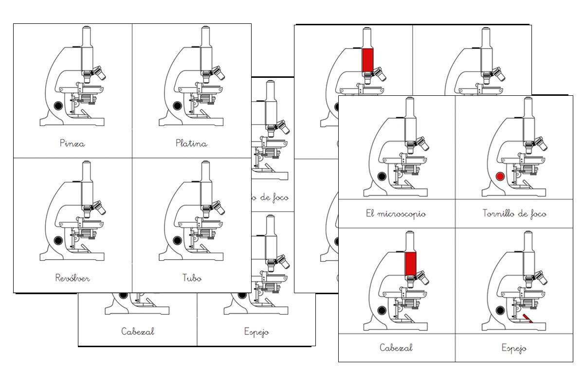 imprimible-cartas-tres-partes-montessori-del-microscopio