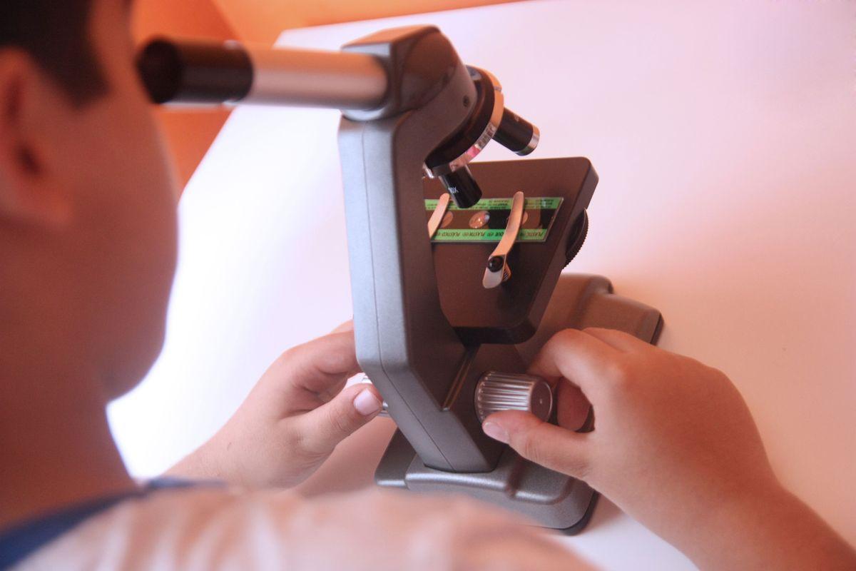 observando en el microscopio