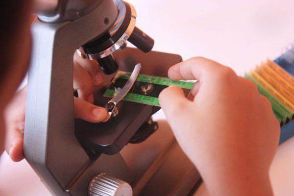 situando la muestra en el microscopio