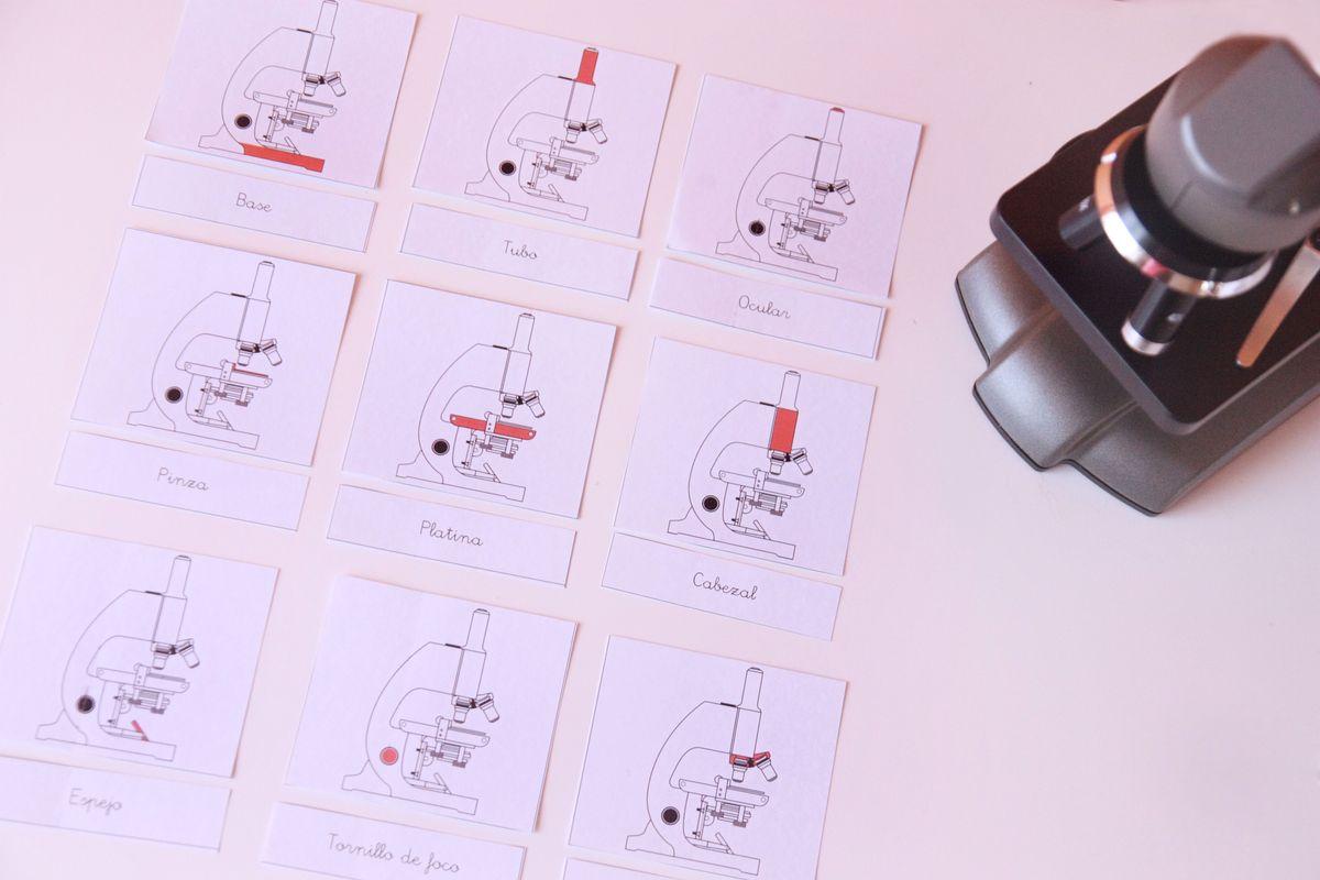 Tarjetas Montessori del microscopio