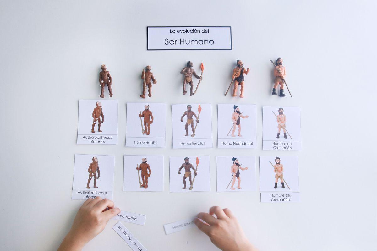 evolucion-del-ser-humano-nomenclatura