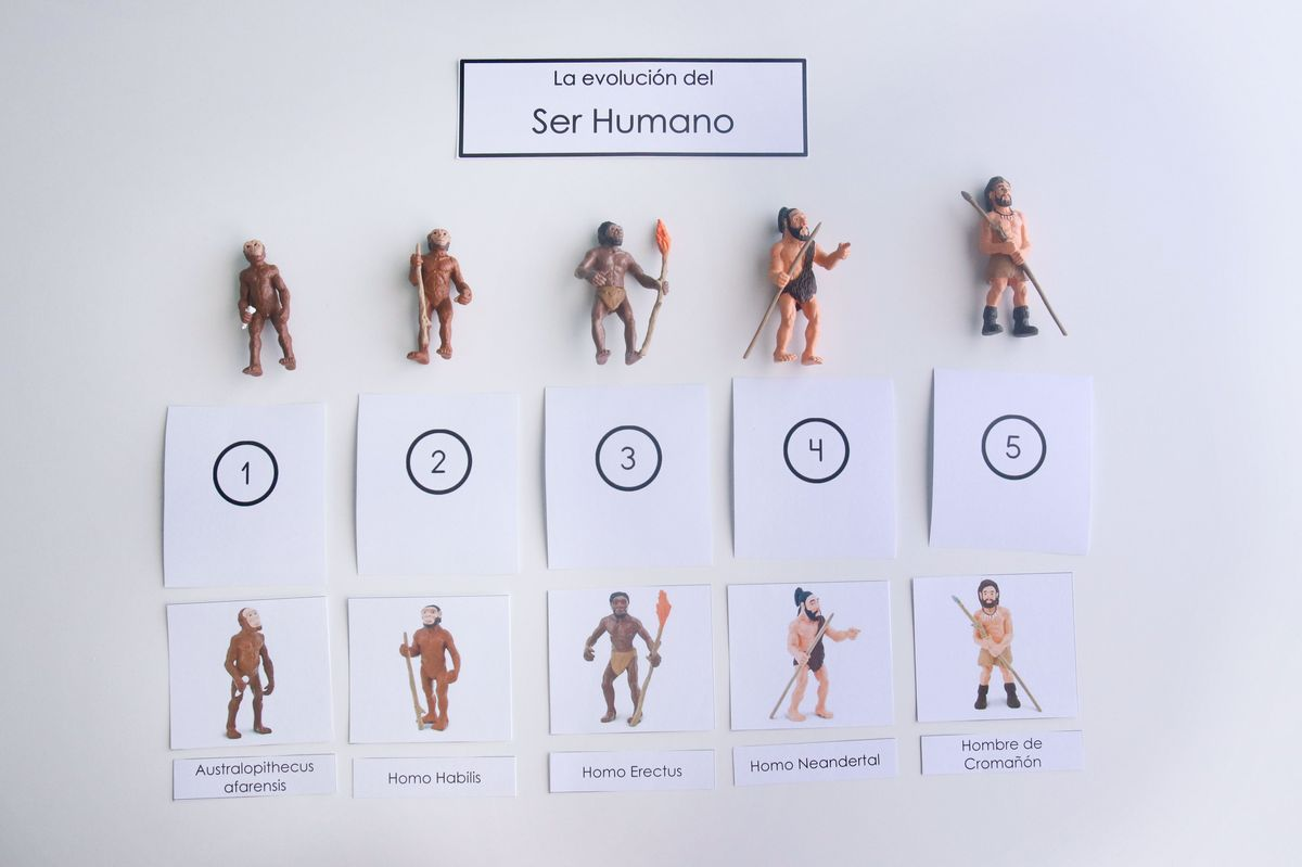 evolucion-del-ser-humano-orden