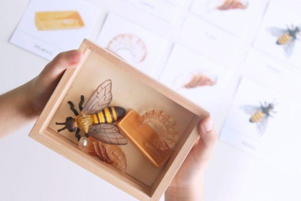 miniaturas del ciclo de vida de la abeja safari ltd