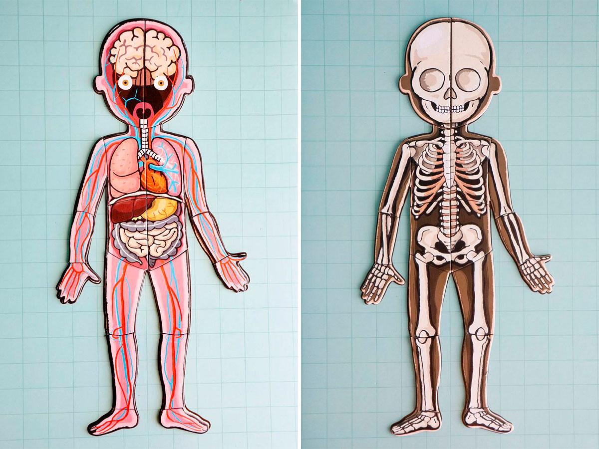 organos-y-esqueleto-puzle
