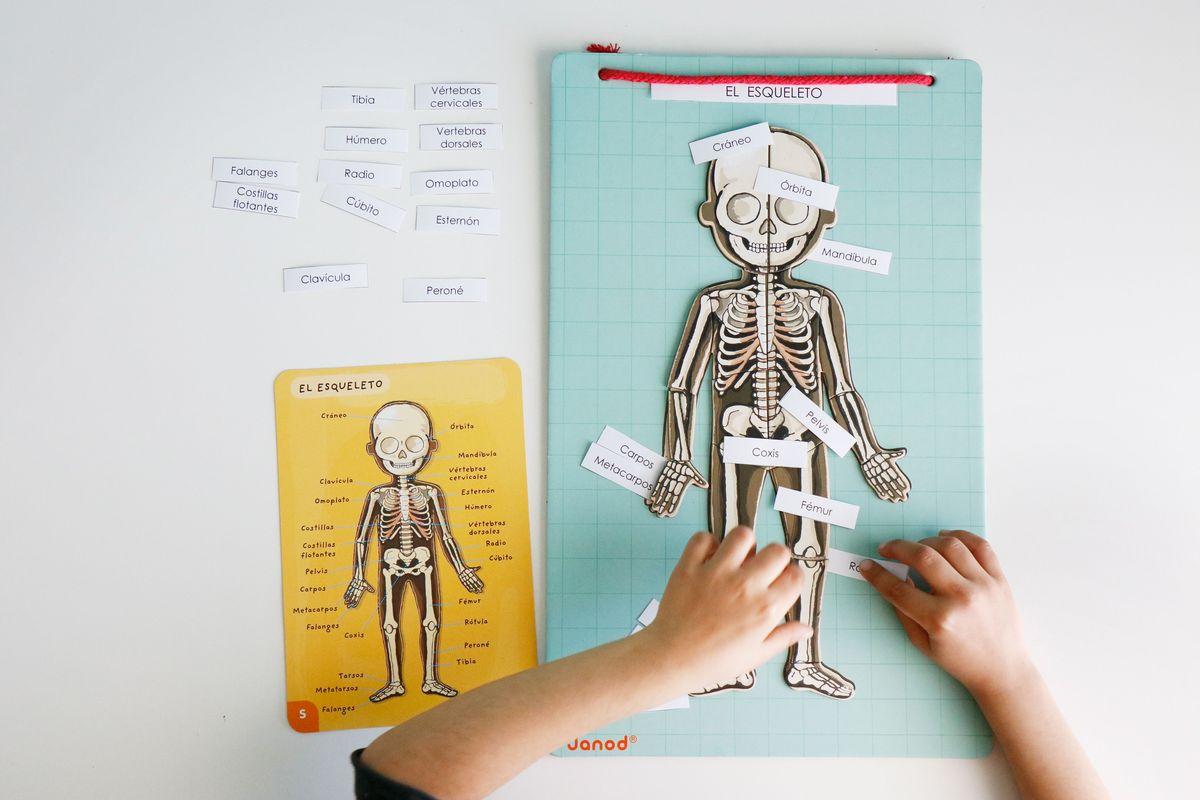 Aprendiendo anatomía con Bodymagnet de Janod + Imprimible - Mumuchu