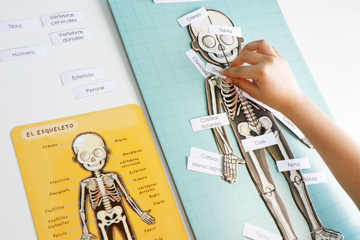 etiquetas-para-el-esqueleto