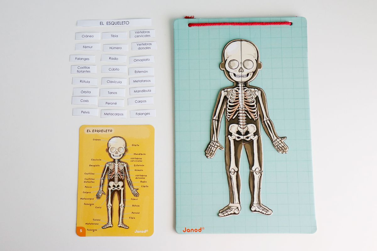 juego-de-los-huesos-del-cuerpo-humano