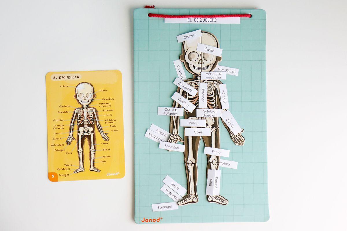 nombres-de-los-huesos-del-cuerpo-humano
