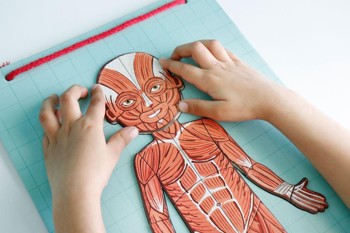 puzle-cuerpo-humano-musculos
