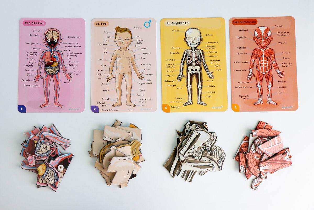 puzle-cuerpo-humano-sistemas