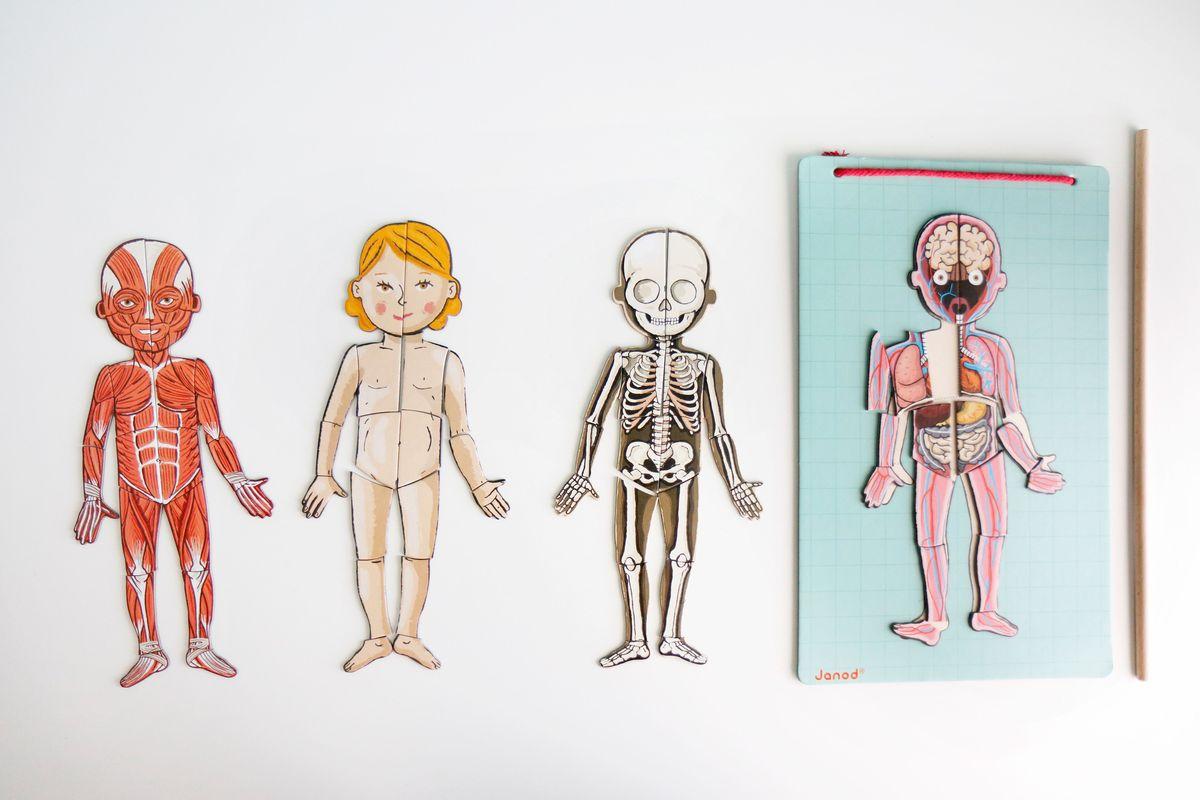 puzle-por-capas-del-cuerpo-humano