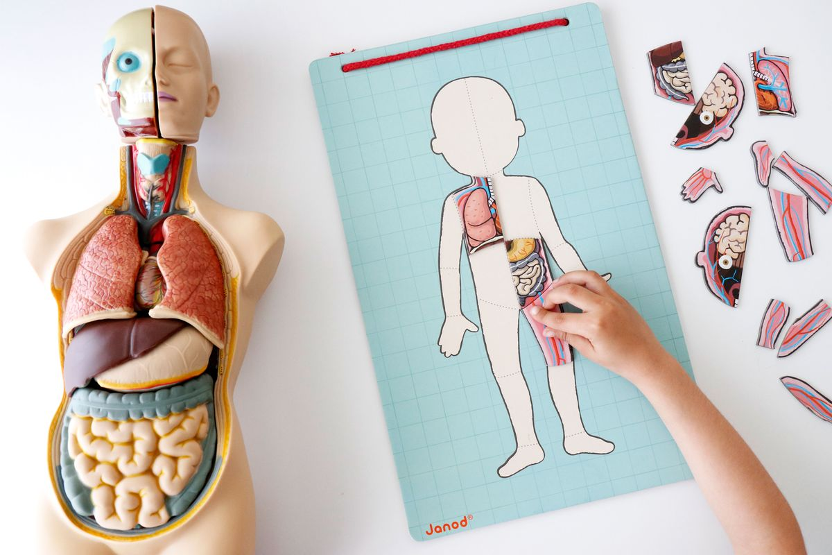 juegos-para-aprender-el-cuerpo-humano