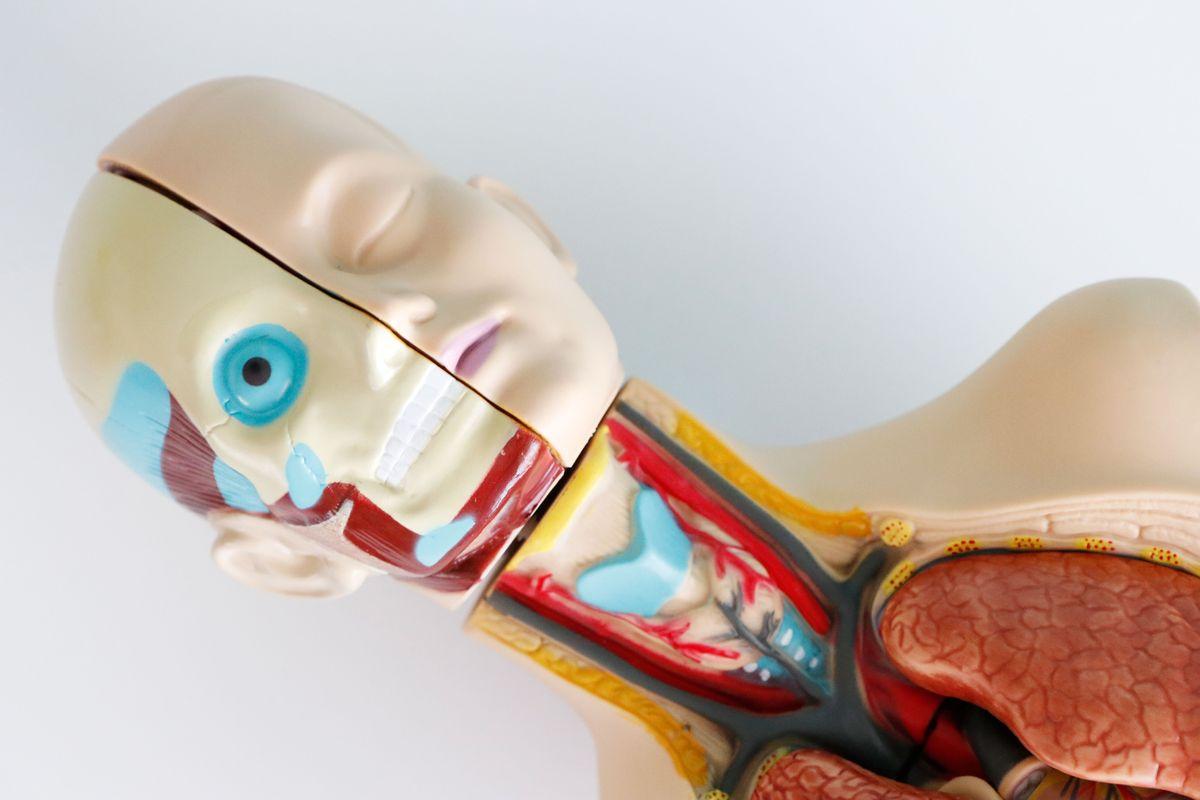 set-de-anatomia-musculos-de-la-cara