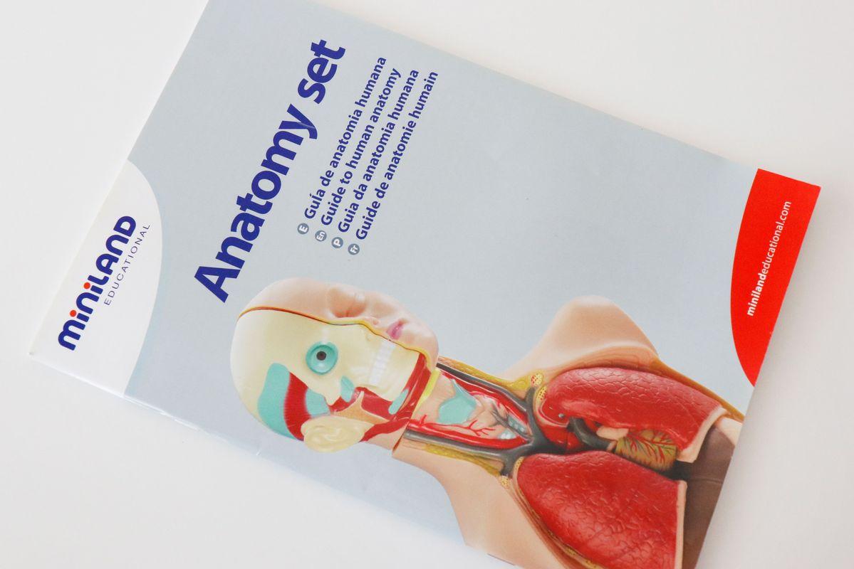 set-de-anatomia-miniland-guia