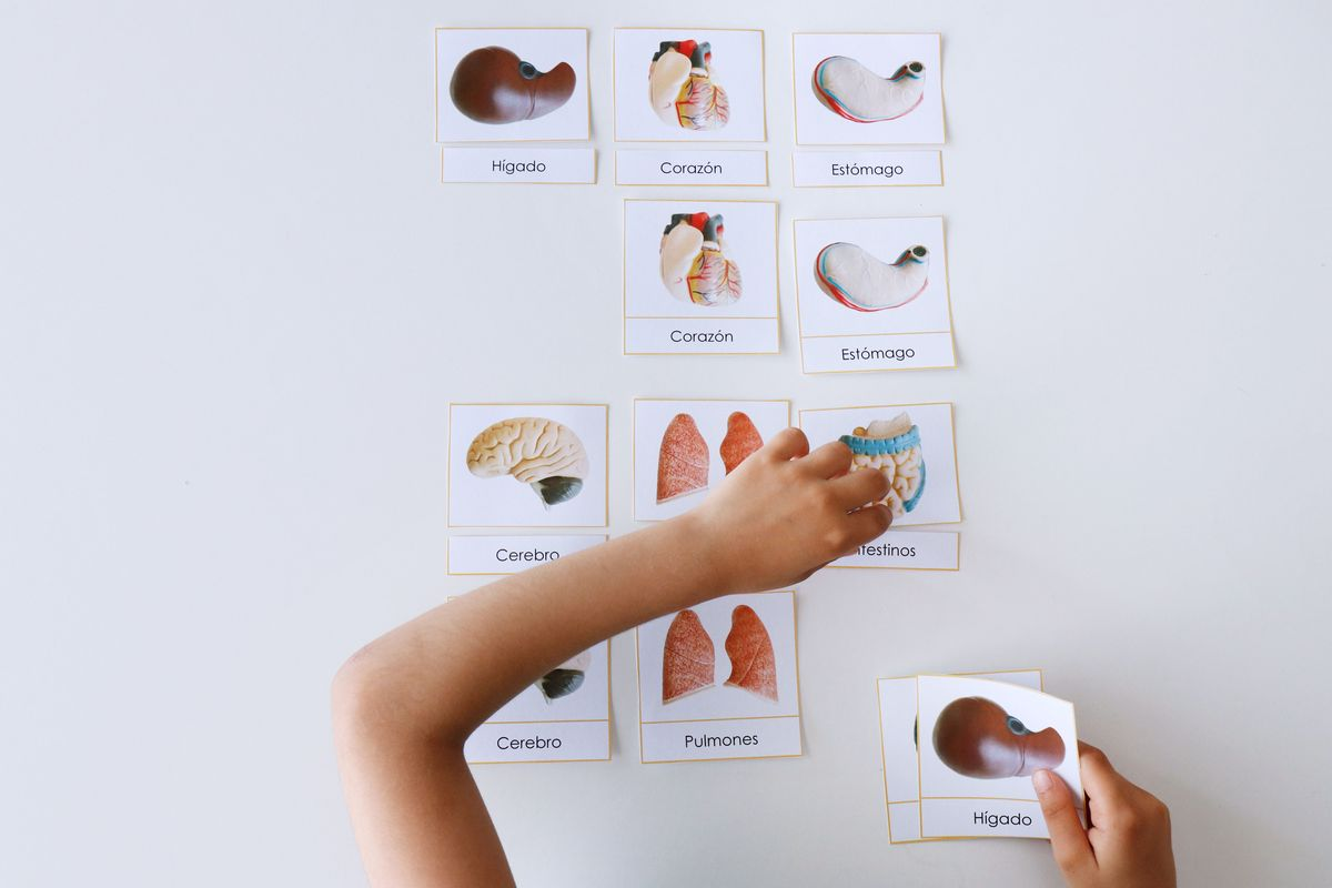 tarjetas-tres-partes-montessori-de-los-organos