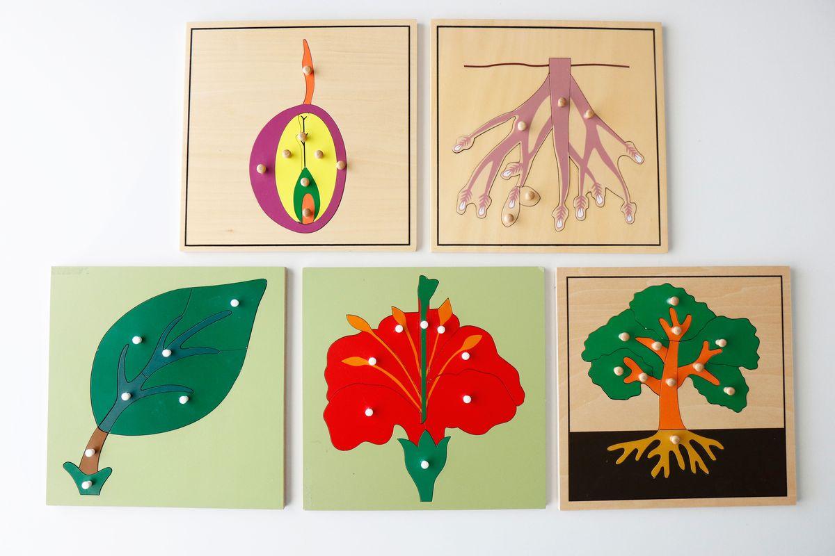 puzles-de-botanica-montessori