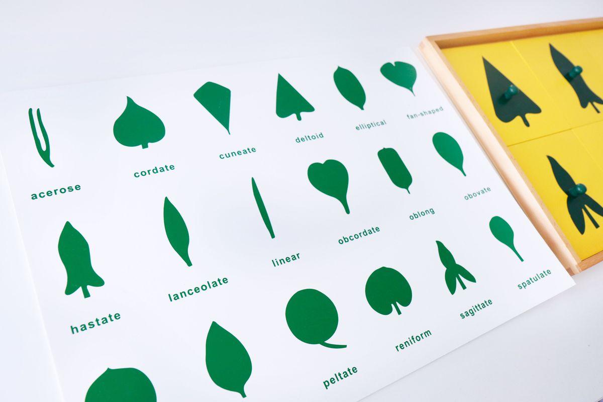 gabinete-de-hojas-botanica-montessori
