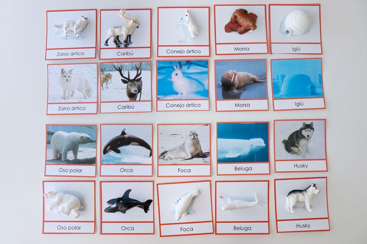 inventario-de-animales-kalandraka-09