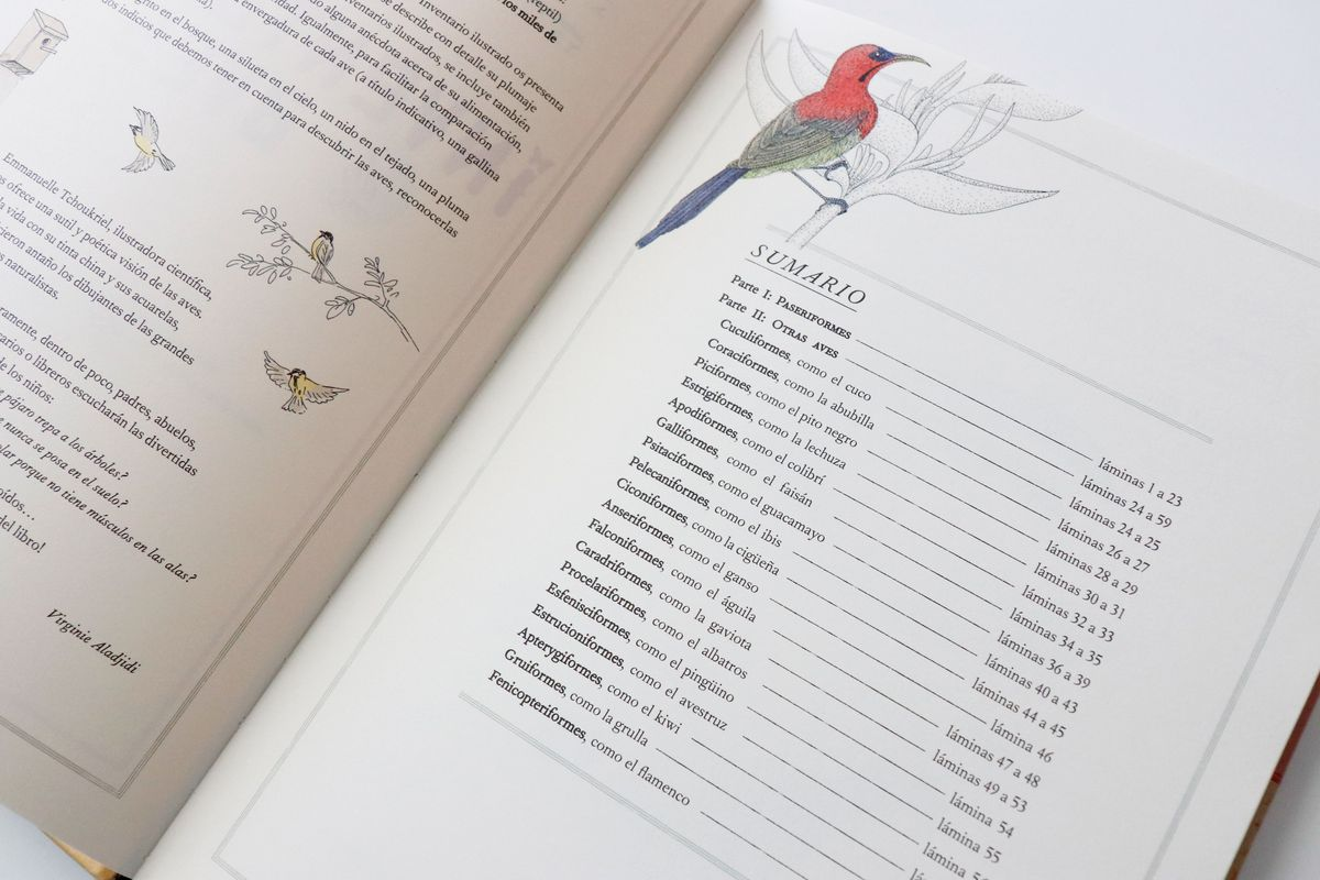 inventario-de-aves-kalandraka-11