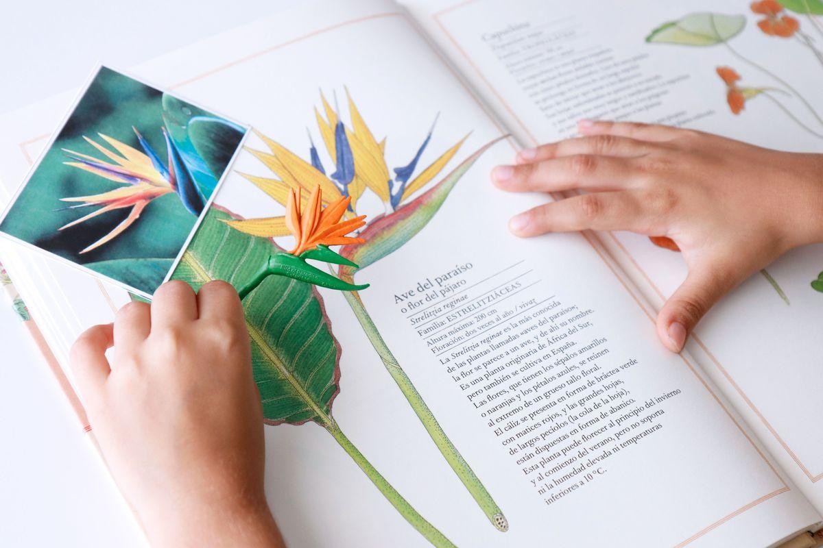 inventario-de-flores-kalandraka-06