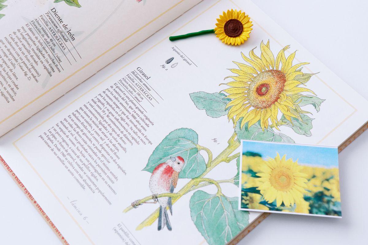 inventario-de-flores-kalandraka-09