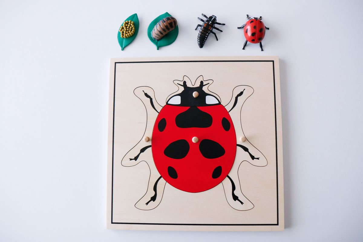inventario-de-insectos-kalandraka-02