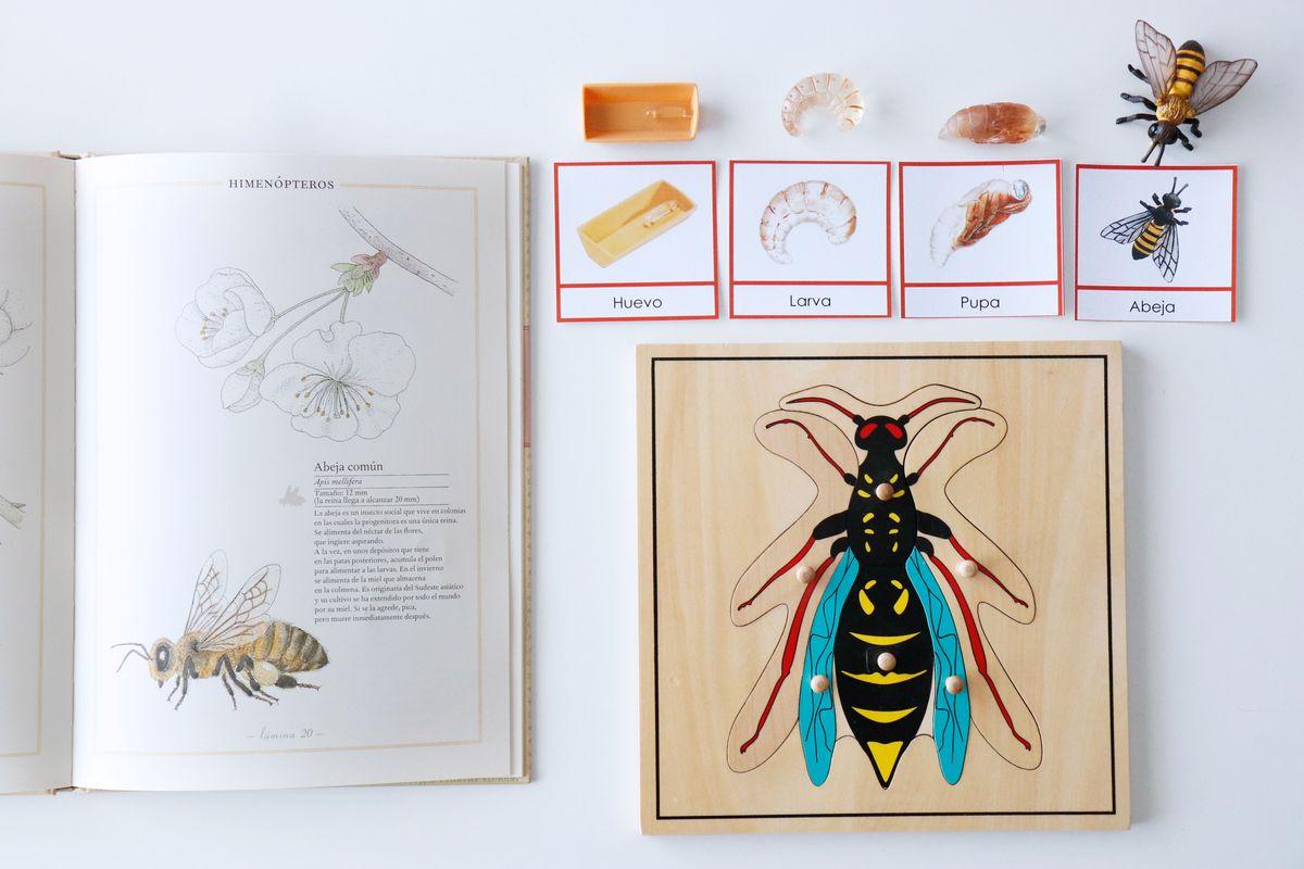 inventario-de-insectos-kalandraka-07