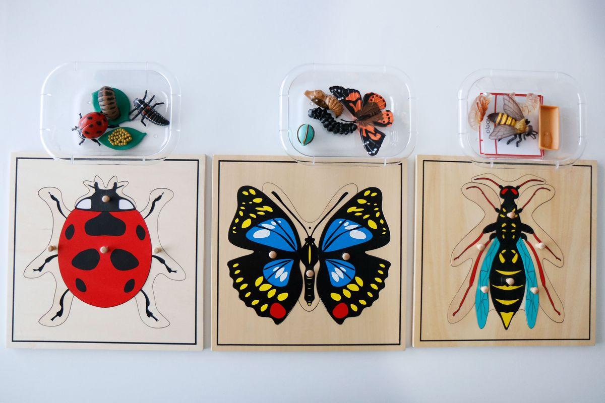 inventario-de-insectos-kalandraka-08