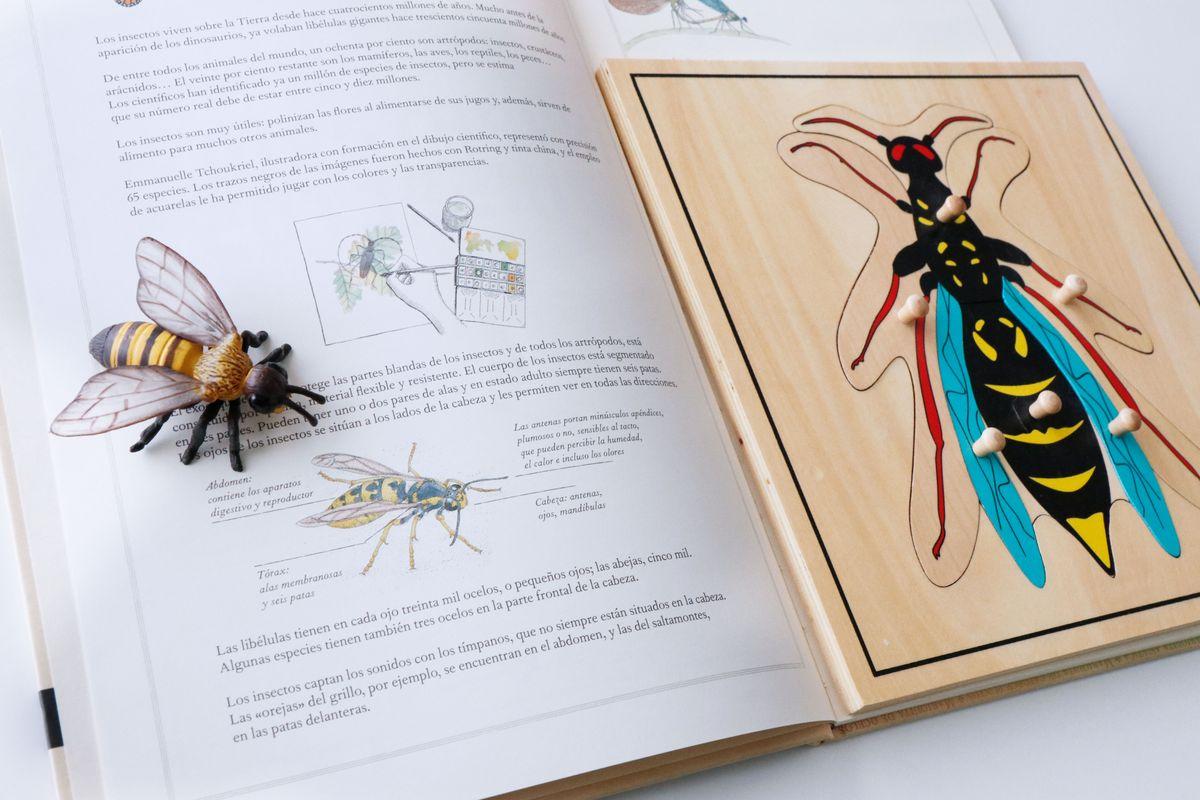 inventario-de-insectos-kalandraka-14