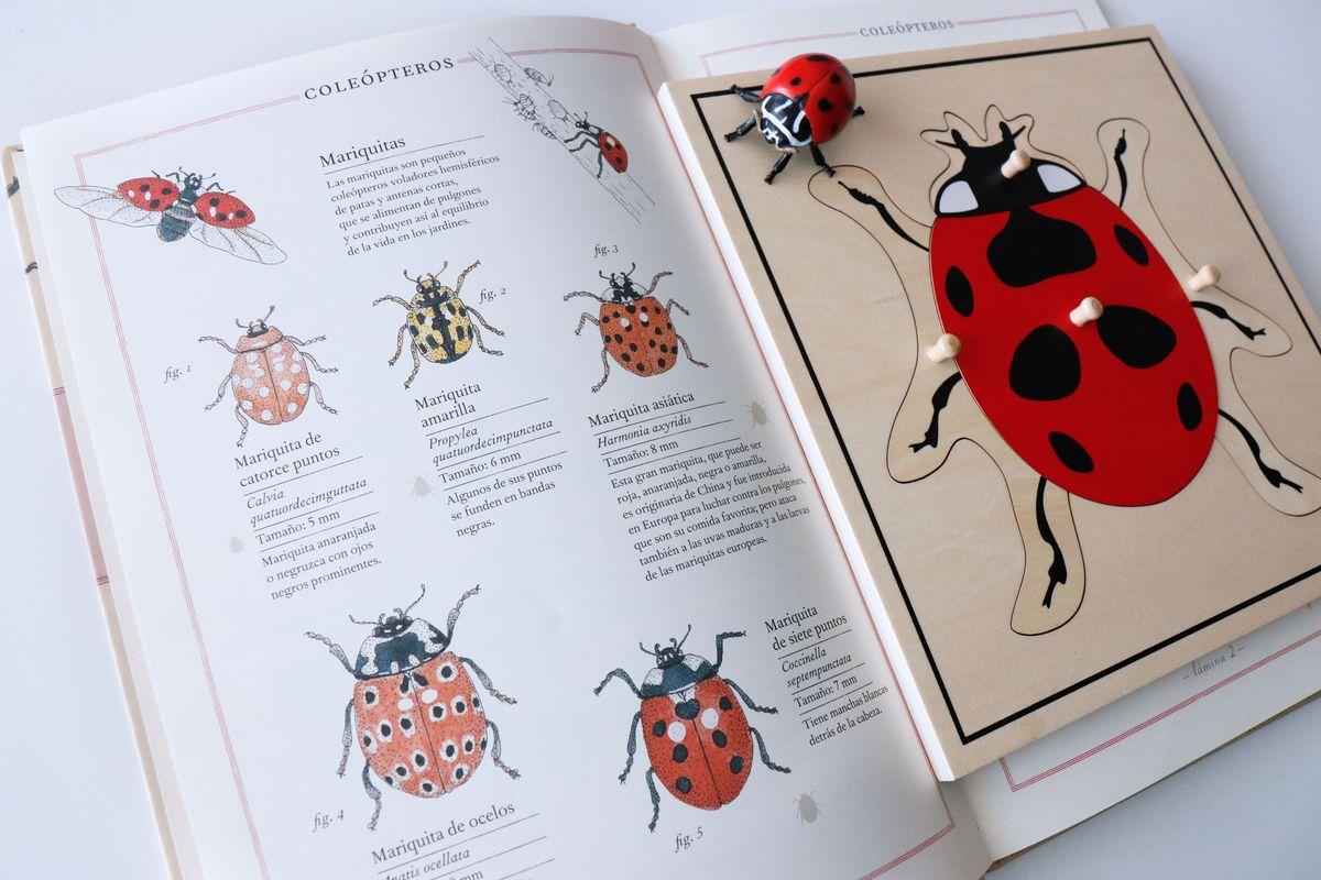 inventario-de-insectos-kalandraka-15